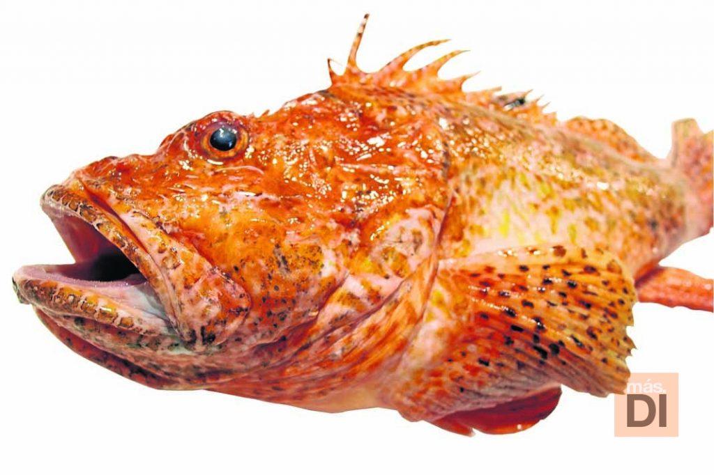 Rotja pescado plato 5